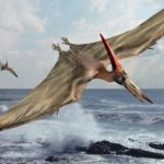 Not without my Pterodactyl – Pets and Landlords